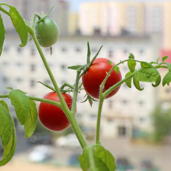solutii pentru agricultura urbana